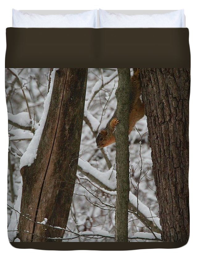 Winter Squirrel Duvet Cover featuring the photograph Winter Squirrel by Dan Sproul
