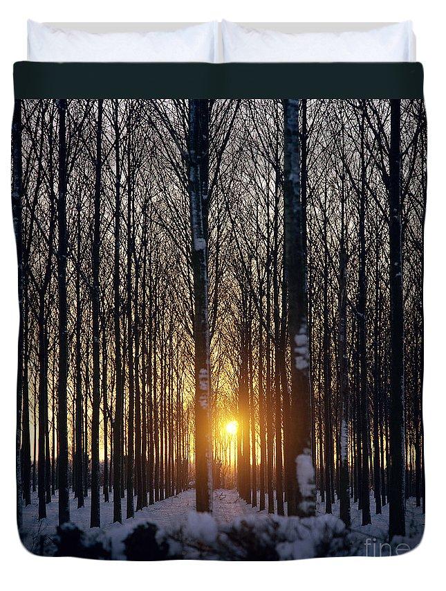 Woods Duvet Cover featuring the photograph Winter Sunset Through The Trees by Robert Hallmann