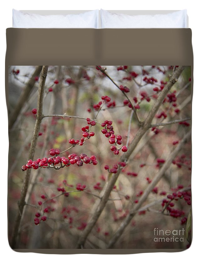 Winterberry Duvet Cover featuring the photograph Winterberries Squared by Teresa Mucha