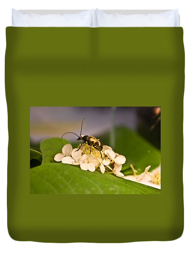 Beetle Duvet Cover featuring the photograph Wise Beetle by Douglas Barnett
