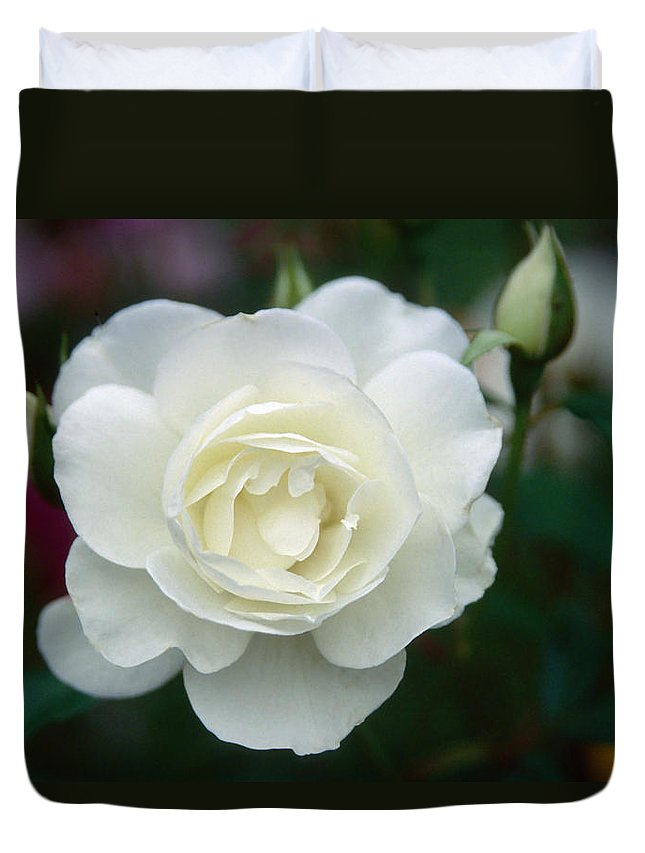 Flower Duvet Cover featuring the photograph Withe Rose by Patrick Kessler