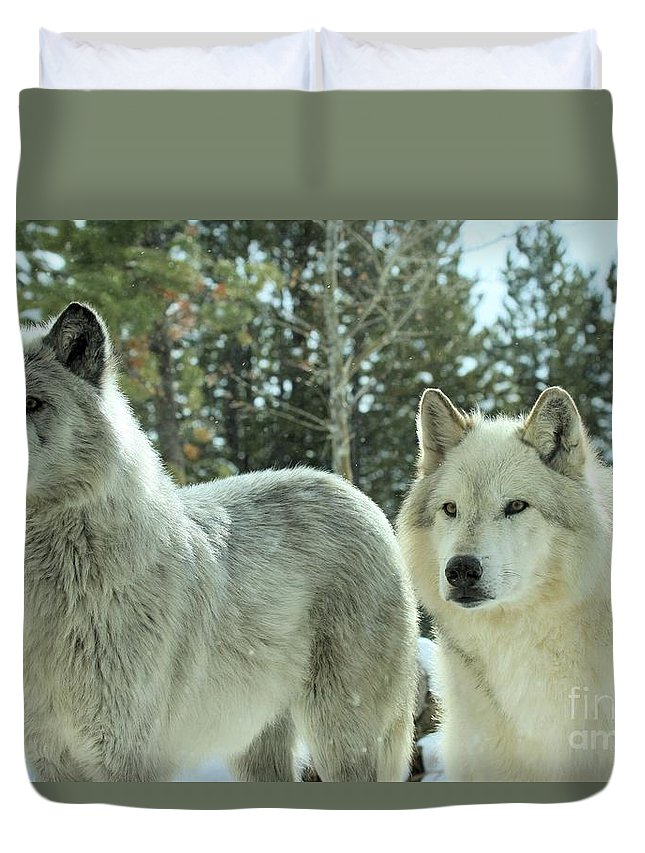 Montana Wolves Duvet Cover featuring the photograph Wolf Gaze by Adam Jewell
