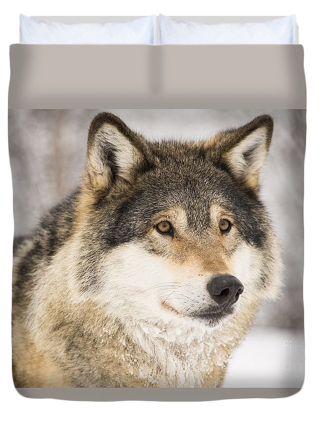 Wolf Duvet Cover featuring the photograph Wolf by Gry Thunes