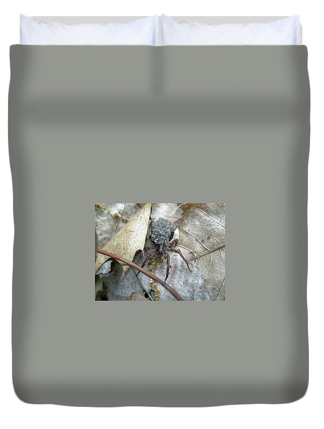 Spider Duvet Cover featuring the photograph Wolf Spider And Spiderlings by Mother Nature
