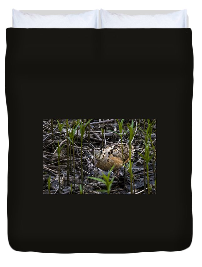 Animal Duvet Cover featuring the photograph Wood Cock by Jack R Perry