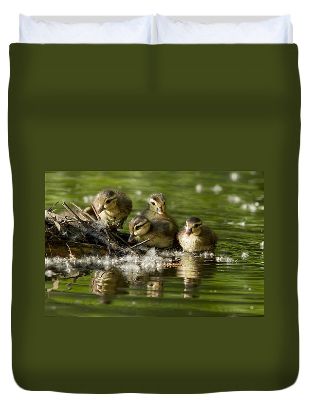 Babies Duvet Cover featuring the photograph Wood Duck Babies by Mircea Costina Photography