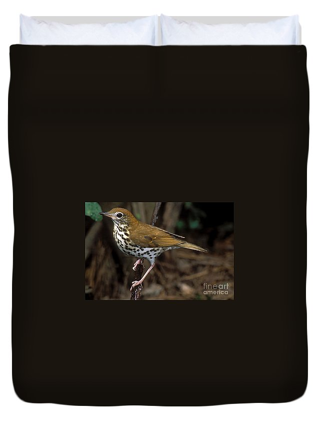 Animal Duvet Cover featuring the photograph Wood Thrush by Anthony Mercieca