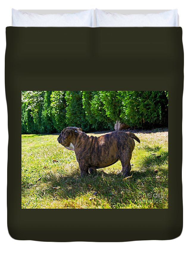 English Duvet Cover featuring the photograph Yard King by Joe Geraci
