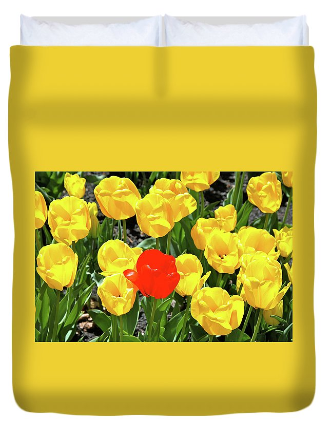 Tulips Duvet Cover featuring the photograph Yellow And One Red Tulip by Ed Riche