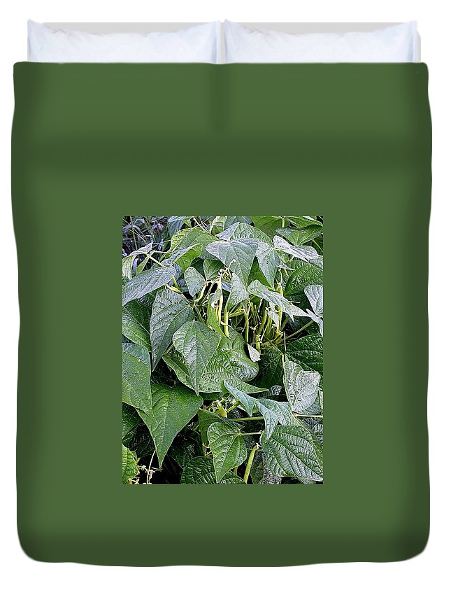 Bean Field Duvet Cover featuring the photograph Yellow Beans by Cynthia Wallentine