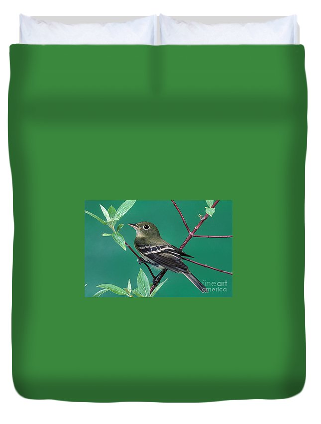Animal Duvet Cover featuring the photograph Yellow-bellied Flycatcher by Anthony Mercieca