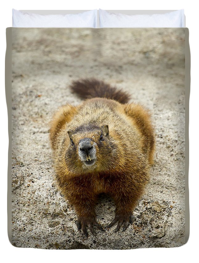 Marmot Duvet Cover featuring the photograph Yellow-bellied Marmot  #5300 by J L Woody Wooden