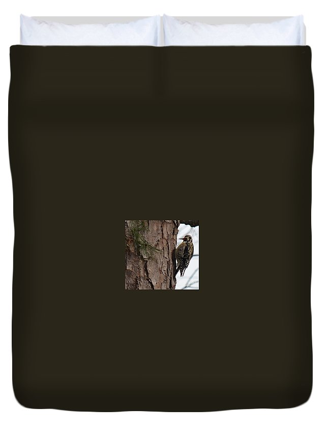 Yellow-bellied Sapsucker Duvet Cover featuring the photograph Yellow-bellied Sapsucker by Maria Urso