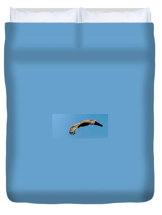 Africa Duvet Cover featuring the photograph Yellow Billed Kite 3 by Alistair Lyne