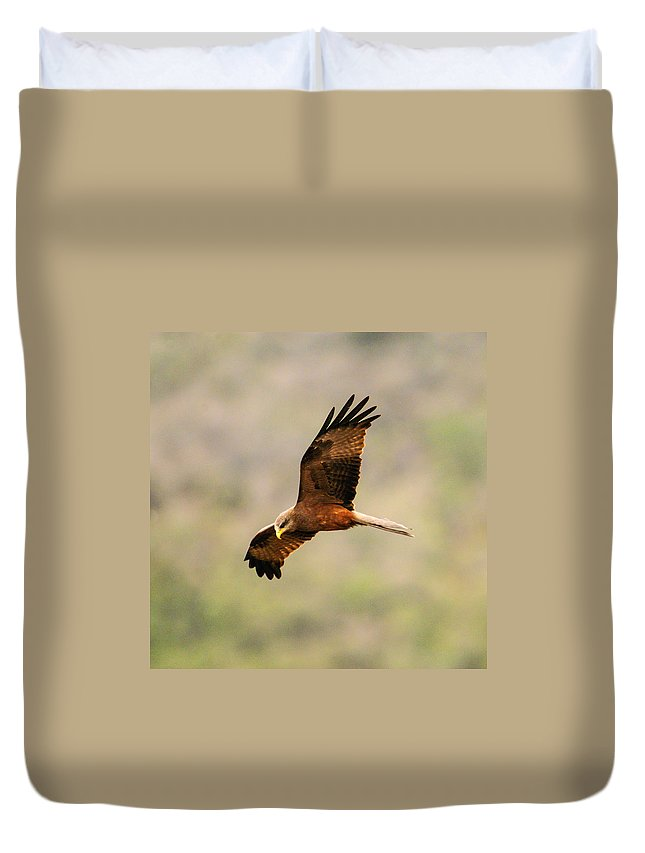 Africa Duvet Cover featuring the photograph Yellow Billed Kite 5 by Alistair Lyne