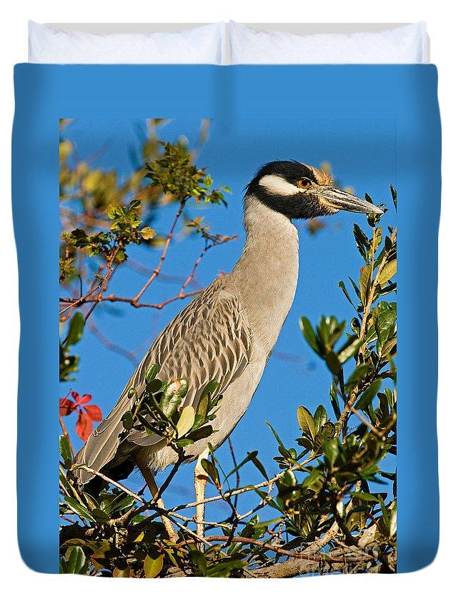 Designs Similar to Yellow Crown Night Heron