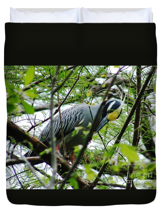 Bird Duvet Cover featuring the photograph Yellow Crowned Night Heron In Display by Lizi Beard-Ward