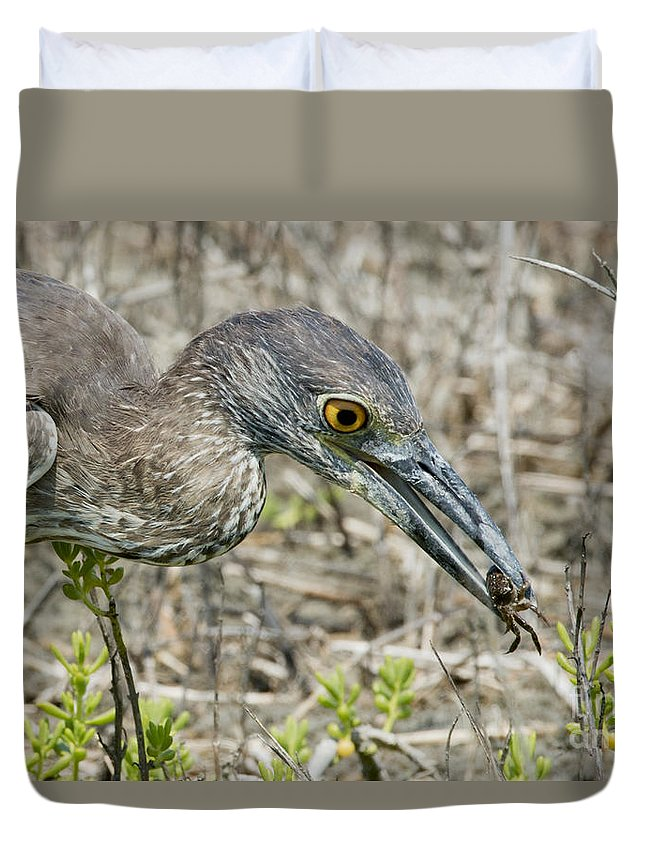 Yellow-crowned Night Heron Duvet Cover featuring the photograph Yellow-crowned Night Heron With Crab by Anthony Mercieca