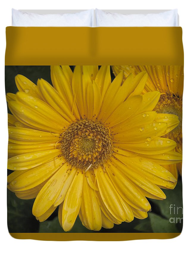 Yellow Duvet Cover featuring the photograph Yellow Daisy by William Norton