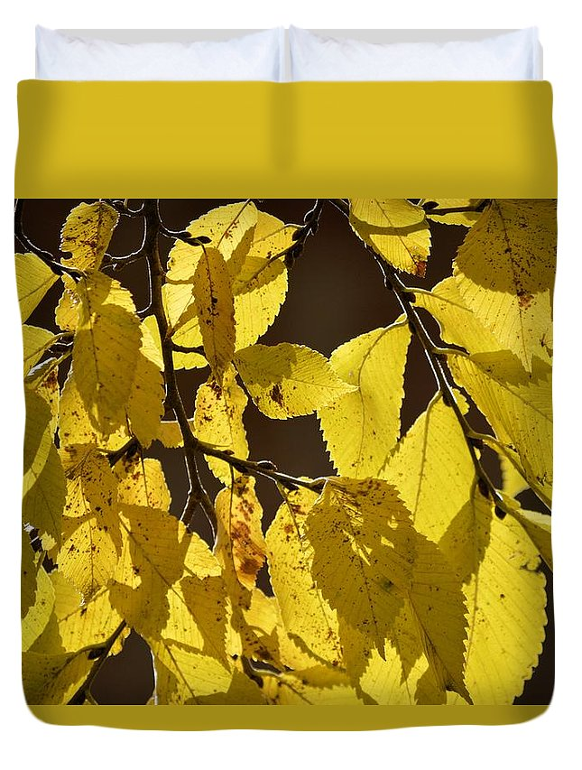 Elm Duvet Cover featuring the photograph Yellow Elm by Bonfire Photography