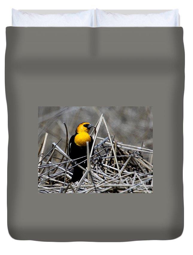 Yellow-headed Blackbird Duvet Cover featuring the photograph Yellow-headed Blackbird by Marty Fancy