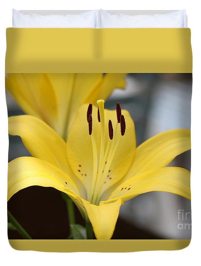 Yellow Duvet Cover featuring the photograph Yellow Lilly by Lori Tordsen