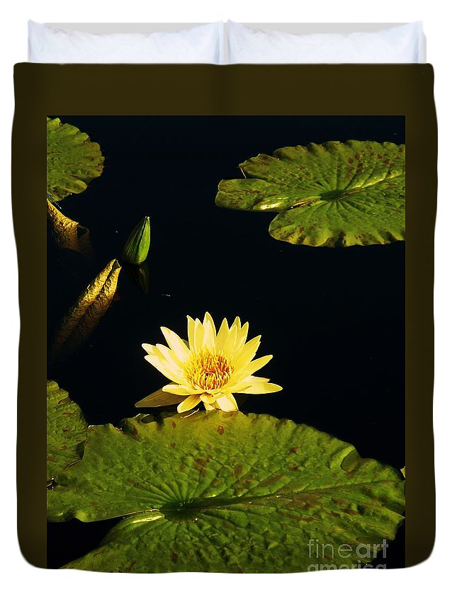 Photograph Duvet Cover featuring the photograph Yellow Lily by Eric Schiabor