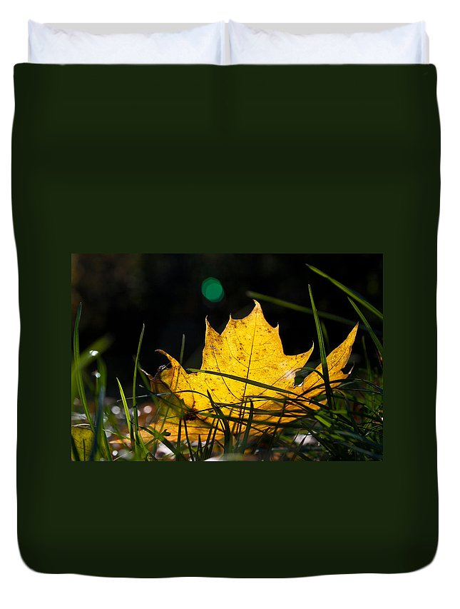 Yellow Maple Leaf Duvet Cover featuring the photograph Yellow Maple Leaf by Cristina-Velina Ion