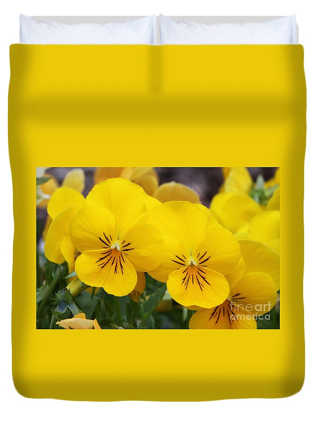 Pansy Duvet Cover featuring the photograph Yellow Pansies by Judy Whitton