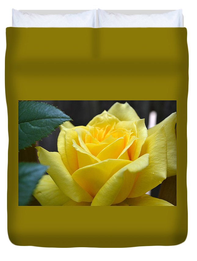 Rose Duvet Cover featuring the photograph Yellow Rose Ll by Michelle Calkins