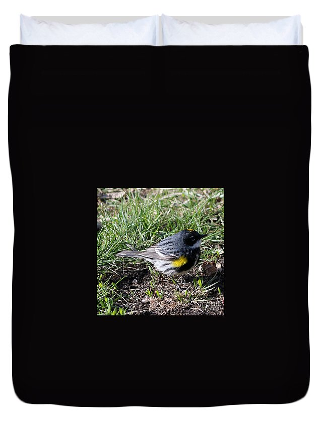 Yellow-rumped Warbler Duvet Cover featuring the photograph Yellow-rumped Warbler  by Lori Tordsen