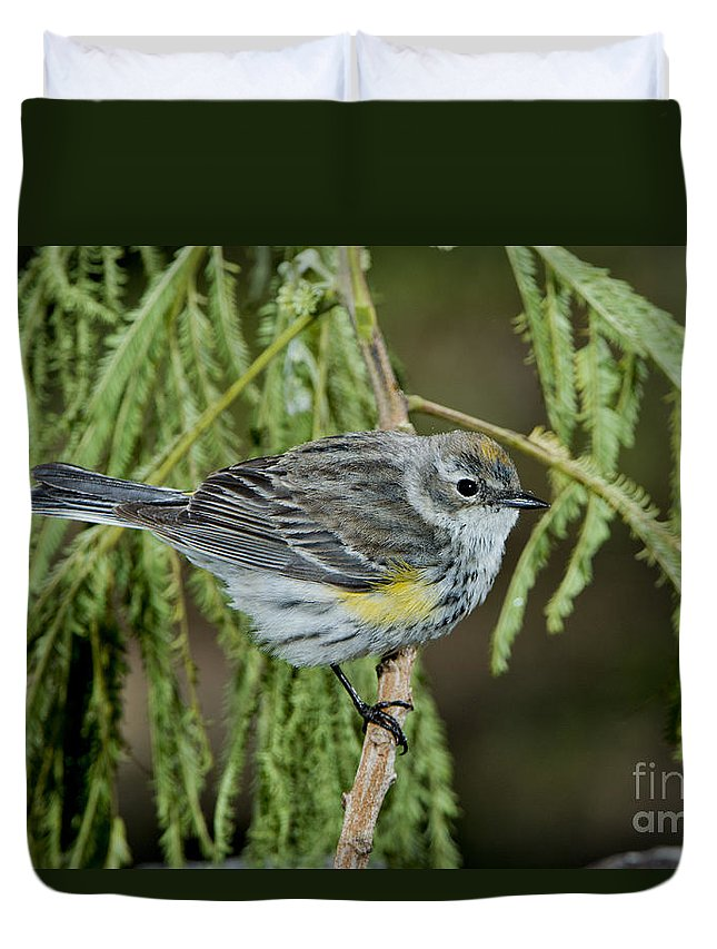 Yellow-rumped Warbler Duvet Cover featuring the photograph Yellow-rumped Warbler by Anthony Mercieca