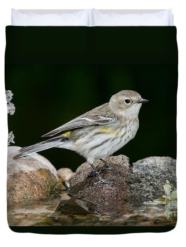 Yellow-rumped Warbler Duvet Cover featuring the photograph Yellow-rumped Warbler Hen by Anthony Mercieca