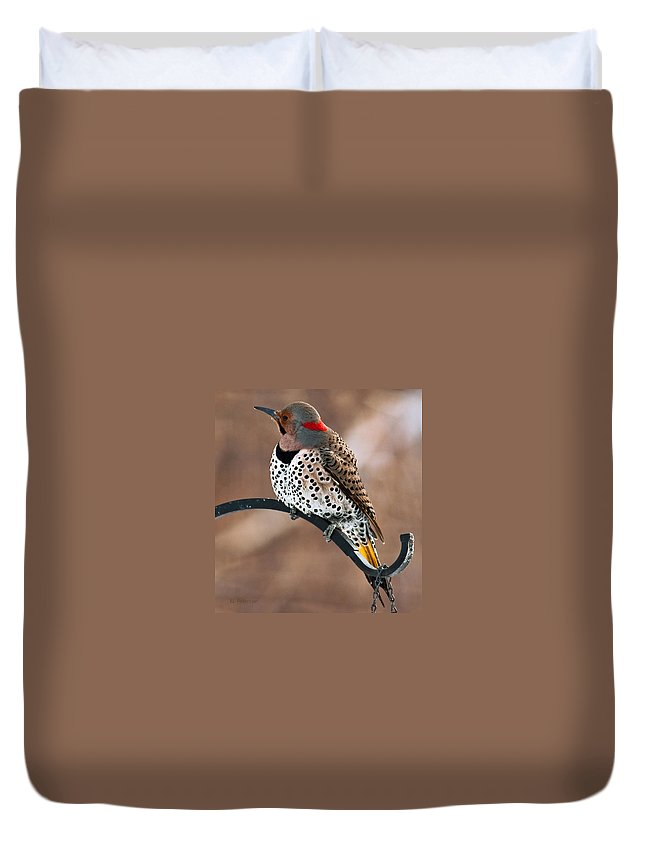 Yellow Shafted Northern Flicker Duvet Cover featuring the photograph Yellow-shafted Northern Flicker by Edward Peterson