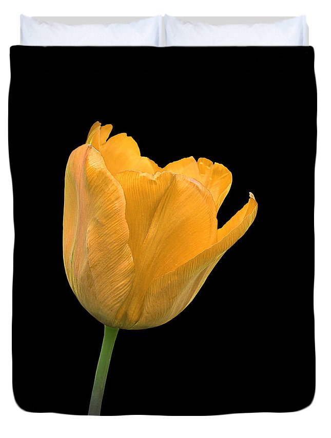 Yellow Tulip Duvet Cover featuring the photograph Yellow Tulip Open On Black by Gill Billington