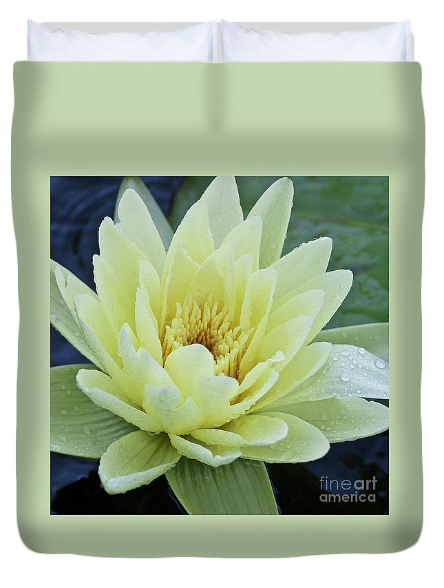 Water Llilies Duvet Cover featuring the photograph Yellow Water Lily Nymphaea by Heiko Koehrer-Wagner
