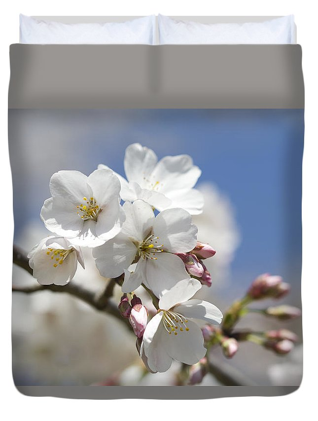 Yoshino Duvet Cover featuring the photograph Yoshino Cherry Blossoms by Kathy Clark