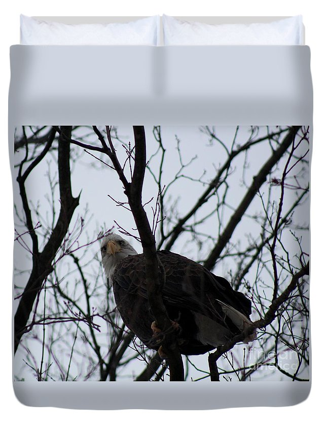 Bald Eagle Duvet Cover featuring the photograph You Look Yummy by Stephanie Kripa