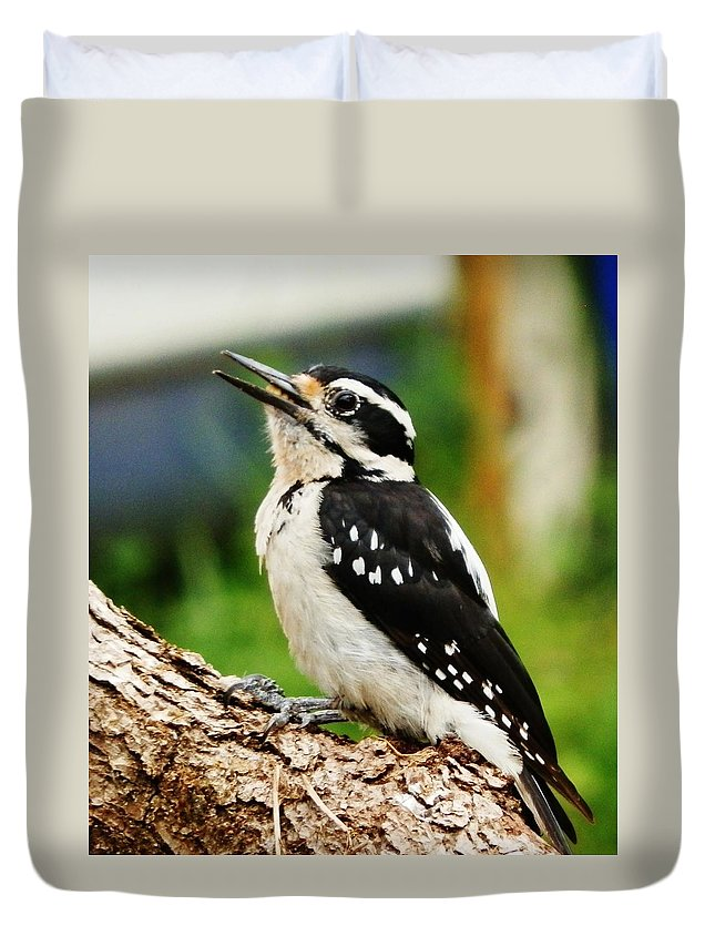Woodpecker Duvet Cover featuring the photograph Young Hairy Woodpecker by VLee Watson