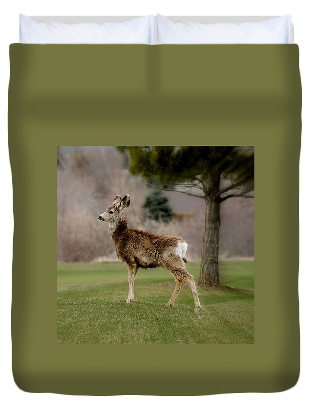 Big Ears Duvet Cover featuring the photograph Young Mule Deer by Ernie Echols