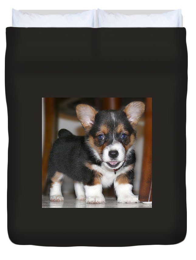 Dog Duvet Cover featuring the photograph Young Otis Ray 3 by Mike McGlothlen