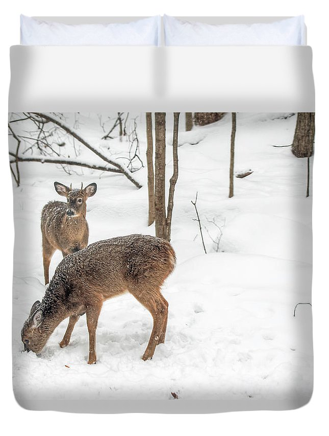 Deer Duvet Cover featuring the photograph Young Spike Buck And Doe Whitetail Deer In Snowy Woods by Mother Nature