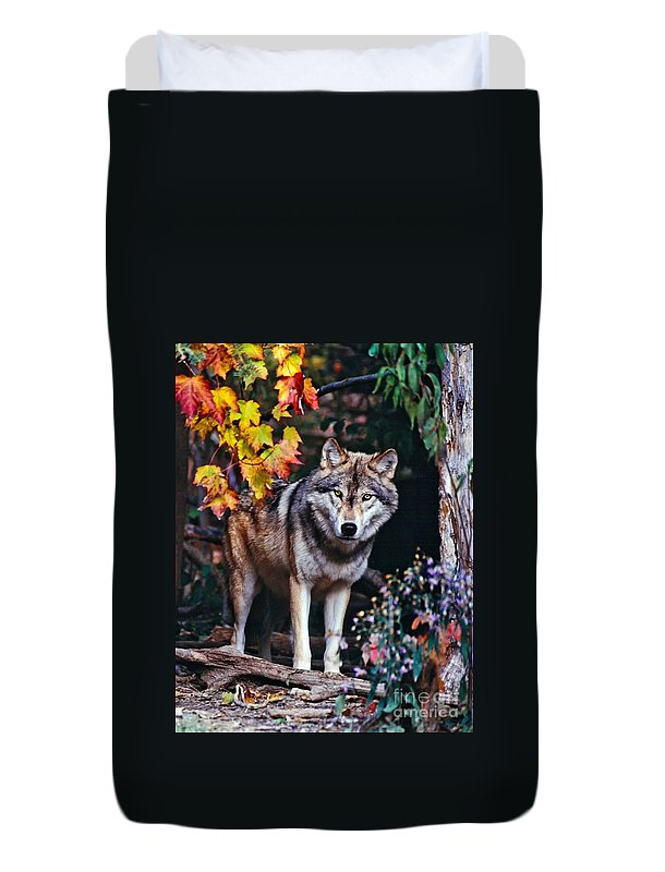 Two Duvet Cover featuring the photograph Young Timber Wolf by Les Palenik