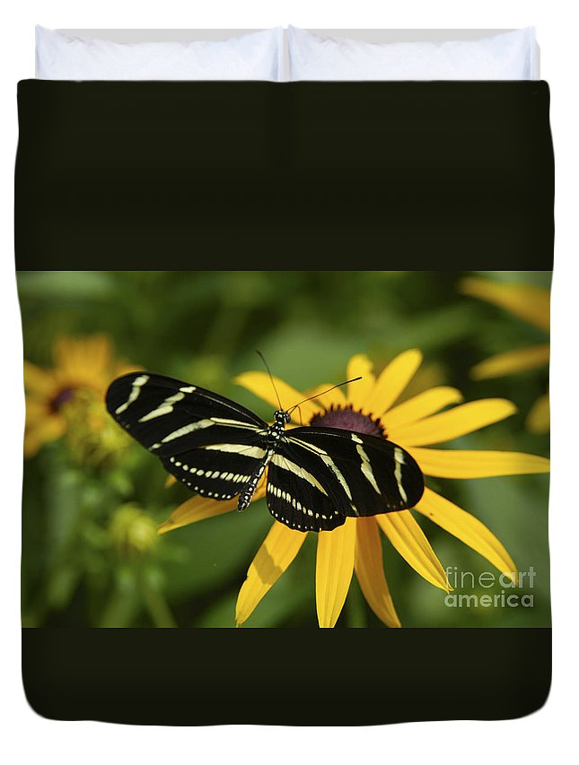 Butterfly Duvet Cover featuring the photograph Zebra Butterfly by Anthony Sacco