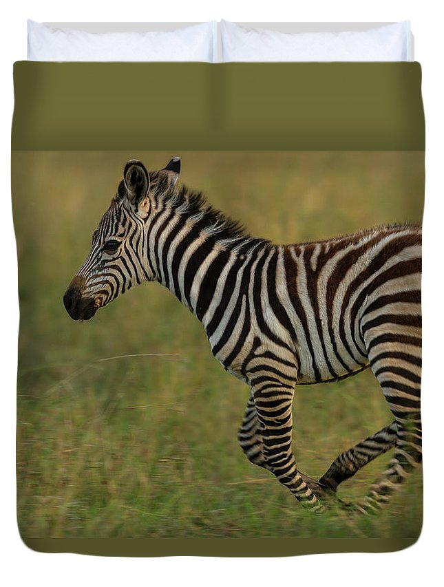 Plains Zebra Duvet Cover featuring the photograph Zebra Foal Running For Joy by Manoj Shah