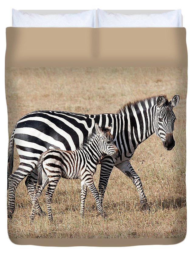 Kenya Duvet Cover featuring the photograph Zebra With Young Foal, Masai Mara by Angelika