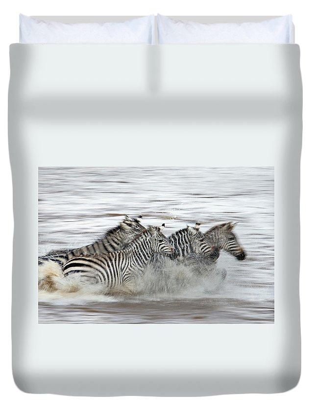 Plains Zebra Duvet Cover featuring the photograph Zebras Crossing The Mara River by Aditya Singh
