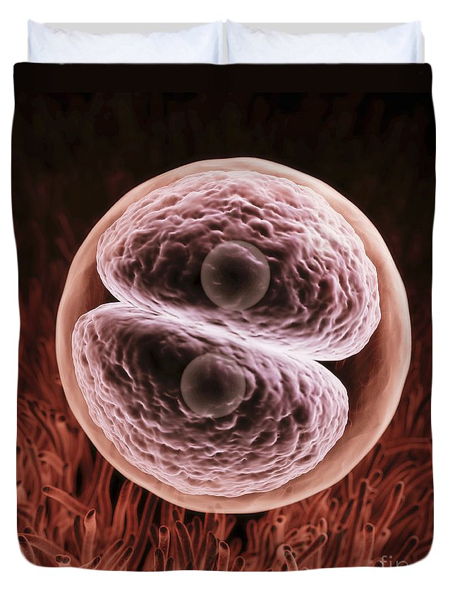 3d Visualisation Duvet Cover featuring the photograph Zygote 24-36 Hours by Science Picture Co