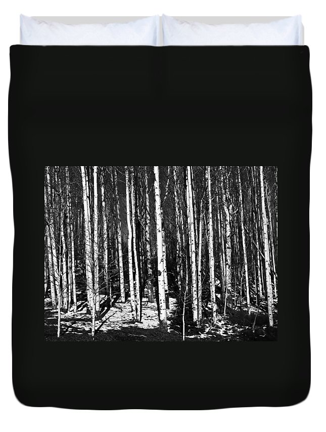 Aspen Duvet Cover featuring the photograph Aspen Tree Trunks by Derek Holzapfel
