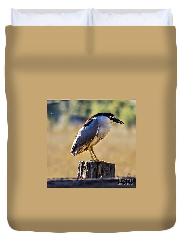 Birds Duvet Cover featuring the photograph Black-crowned Night Heron by Robert Bales